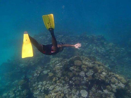 E-Z Boy Tours - Private Tour : Caye chapel aquarium coral formations