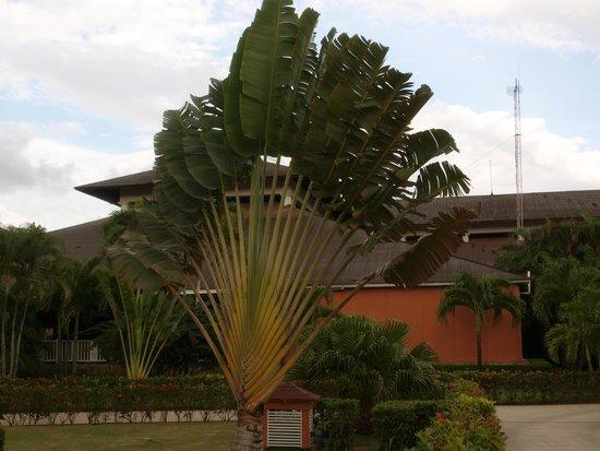 Grand Bahia Principe La Romana: LES JARDINS