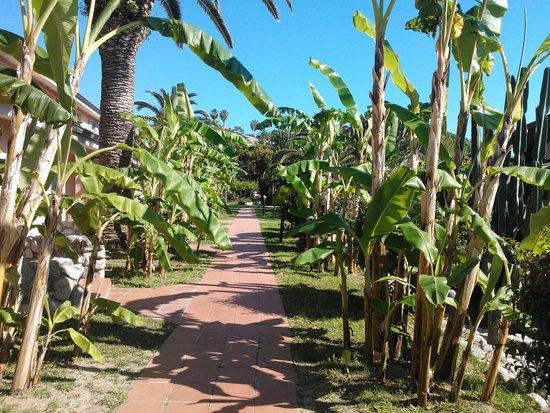 Villaggio Club Baia del Sole: le stradine del villaggio immerse nel verde...