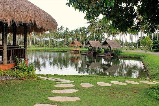 Fish pond picture of banana beach tagum city tripadvisor for Koi pond quezon city