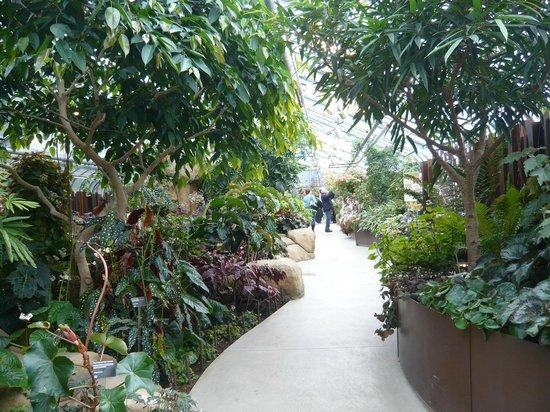 Montreal Botanical Gardens: nem parece inverno