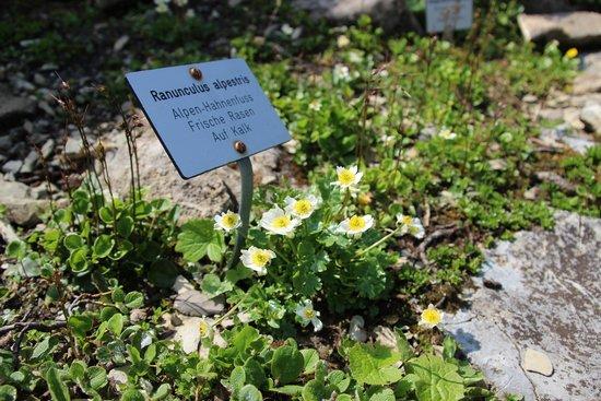 Schynige Platte : 高山植物園