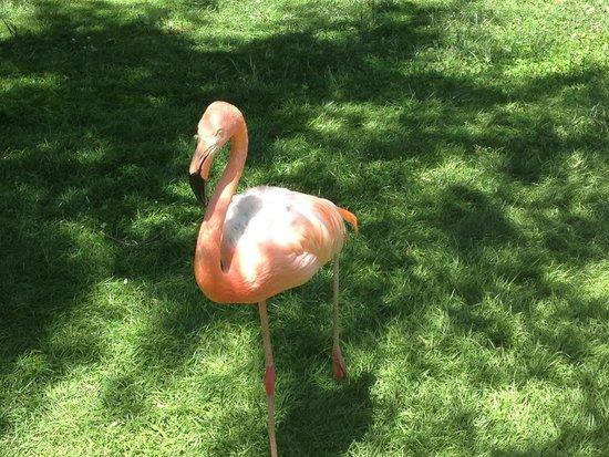 Zoo Aquarium de Madrid : El flamenco