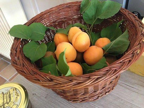 le clos des cyprès : sweet apricots from the garden