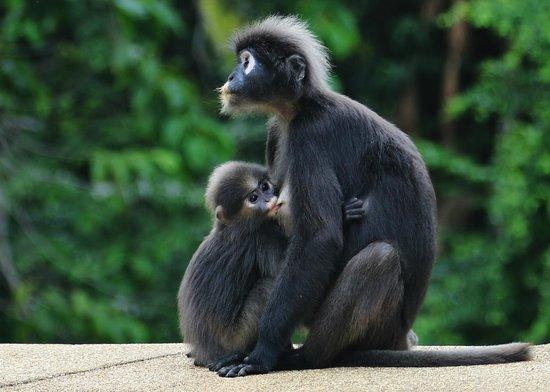 The Datai Langkawi: Mum and her baby