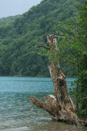 Plitvice Lakes National Park : Spokojna toń jeziora