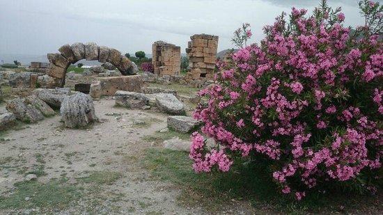 Pamukkale Thermal Pools : ruins and oleander bush