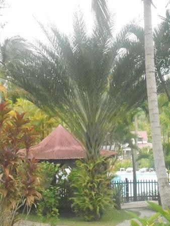 Habitation Grande Anse: parc