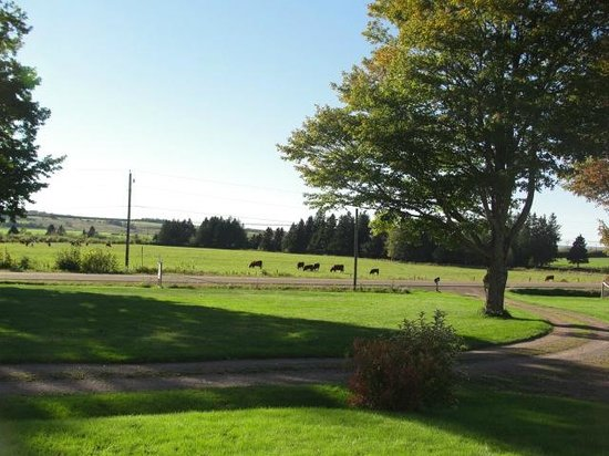 Country Stiles Bed & Breakfast: pastoral surroundings