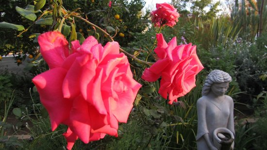 Old Village Lodge: Roses in bloom