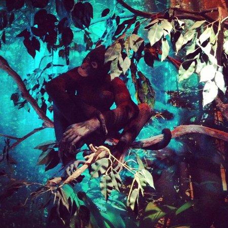 Museo de Oro Pre-Colombiano: Animals