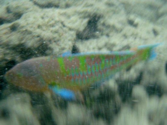 Hanauma Bay Nature Preserve: Colorful fishes