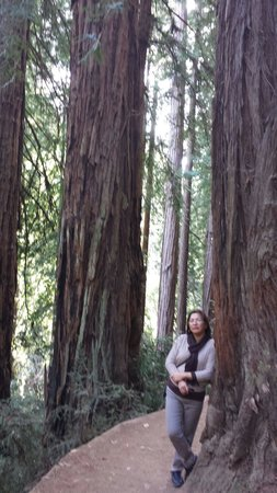 Muir Woods National Monument: One of the trail leading to the forest...