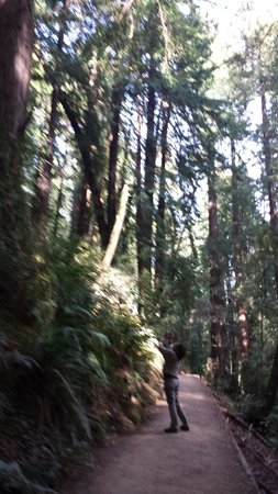 Muir Woods National Monument: Taking pic..