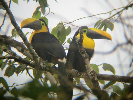 Cabanas Armonia y Jardin de Orquideas : Observación de aves en Mindo
