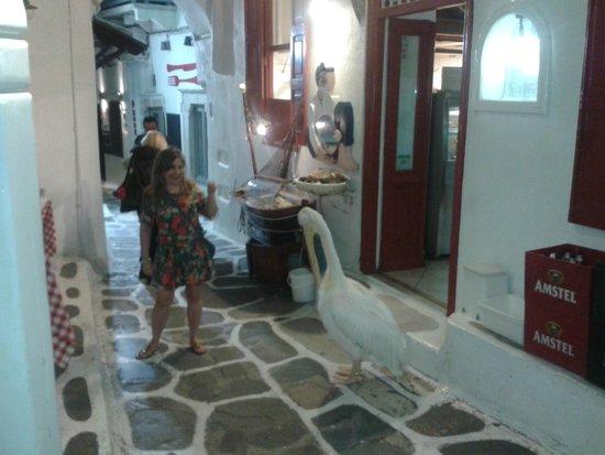 Niko's Taverna: Pelicano Pétros