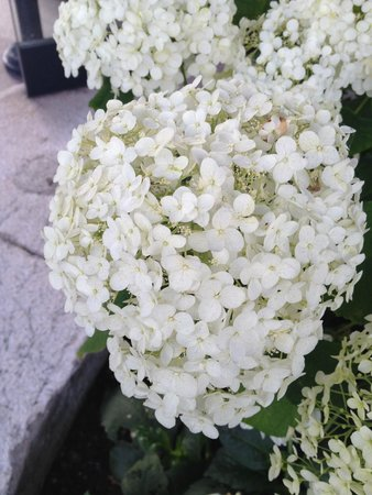Hotel Beau-Rivage Geneva: Flowers in blosson at the entrance