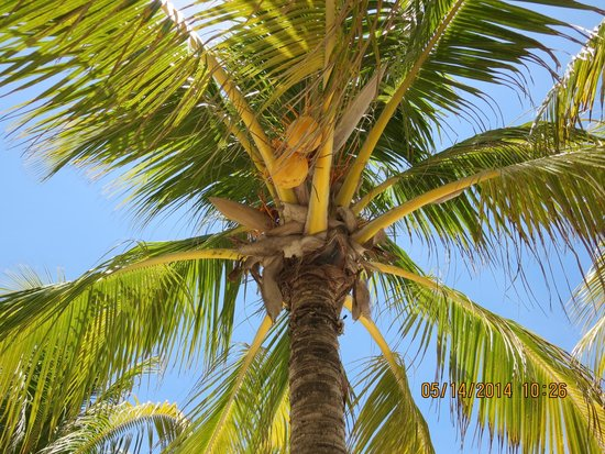 Holbox Hotel Mawimbi : Don't Sit Under The Coconuts