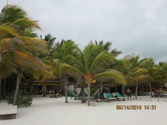 Holbox Hotel Mawimbi : Beautiful Palms