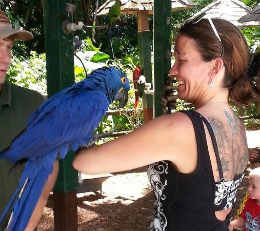 Sarasota Jungle Gardens: Gorgeous birds