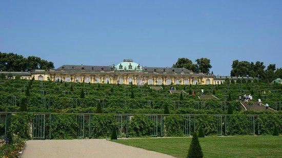 Parque Sanssouci: วิวหน้าปราสาท