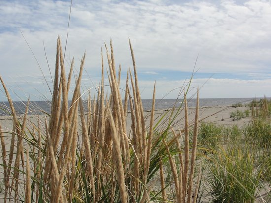 Kouchibouguac National Park : Kelly's Beach Boardwalk trail