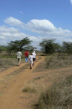 on the way to kitengela glass through Silole Sanctuary