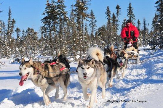 Villégiature & Pourvoirie Daaquam : traîneau à chiens