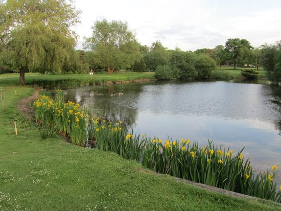 Copthorne Hotel Effingham Gatwick: Lake by golf course.