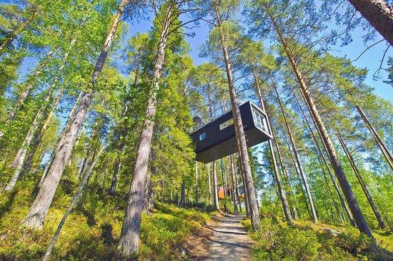 Treehotel : room