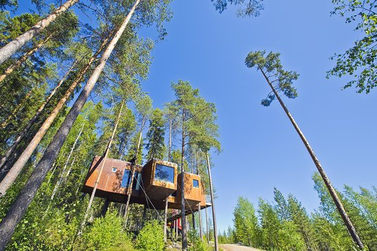 Treehotel: room