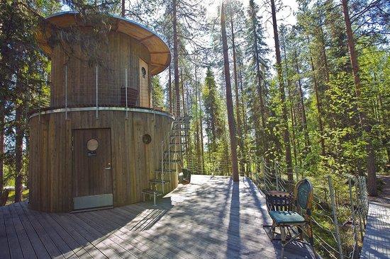 Treehotel: sauna