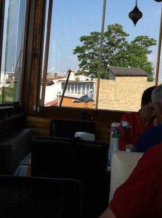 Sirma Sultan Hotel Istanbul: Похититель завтрака)