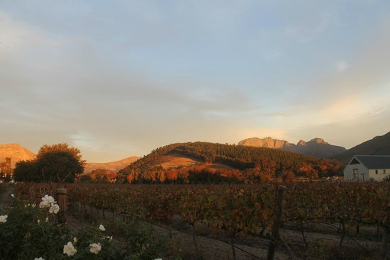 Fransvliet Guest House: View from Chenin