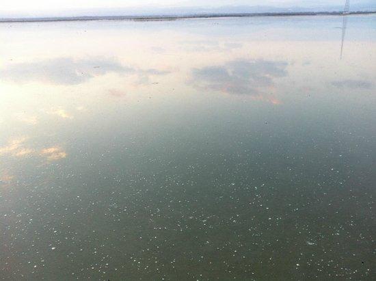Lady's Mile Beach: Fragile surface
