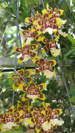 Vizcaya Museum and Gardens: Orchids in the small garden near the resturant