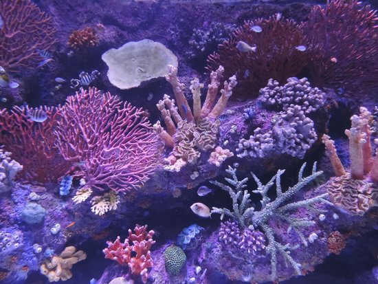 Smooth Travel: Antalya Aquarium