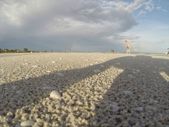 Sanibel Moorings : beach