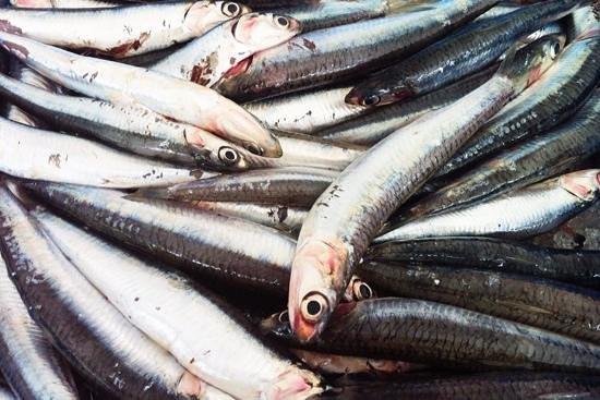 La llotja marisqueria: pescadito fresco