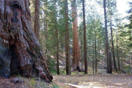North Grove Loop Trail