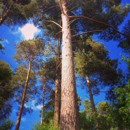 Center Parcs Whinfell Forest: Late afternoon at bilberry wood