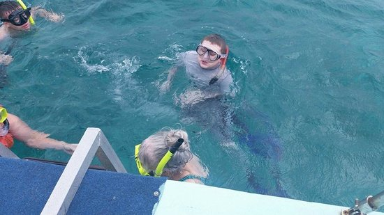 Cari'Bean Tours Belize : Rays, sharks,and manatees, oh my