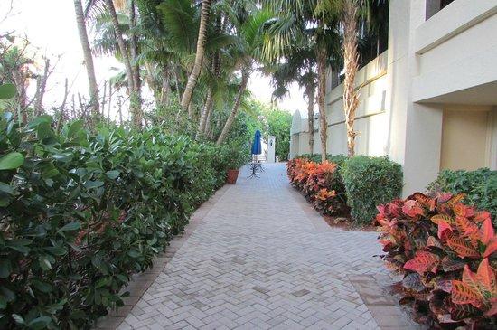 Marco Beach Ocean Resort : walk to the beach