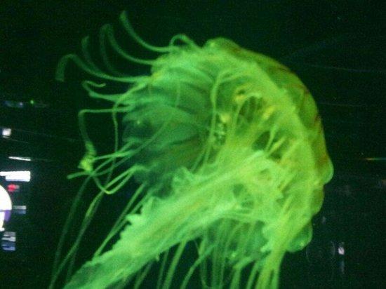 Aquarium du Quebec : Méduse