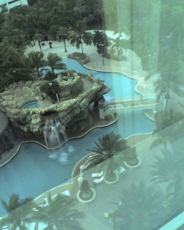 Seminole Hard Rock Hotel Hollywood: pool view