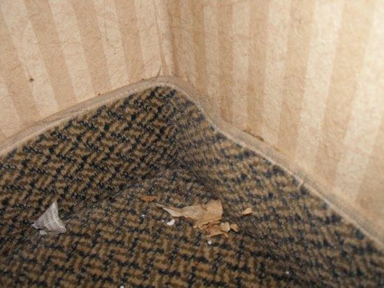 Quality Inn And Suites Detroit Warren Tech Center: water damegd walls