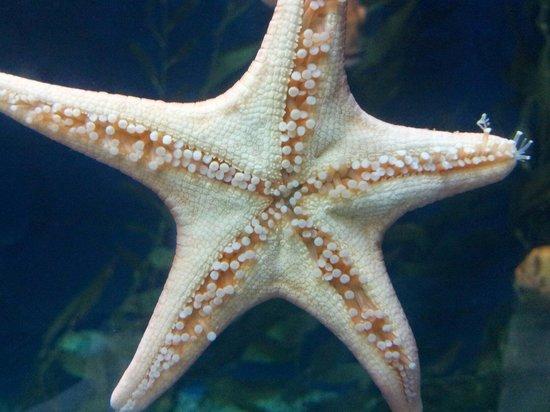 l ours polaire picture of aquarium du city tripadvisor