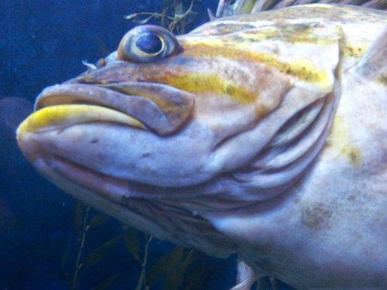 Aquarium du Quebec : Je te regarde moi aussi