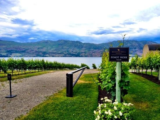 Mission Hill Family Estate Winery : The view and the vineyards