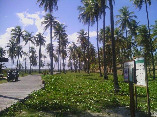 Grand Palladium Imbassai Resort & Spa: camino a la playa donde nos llevan en los carritos